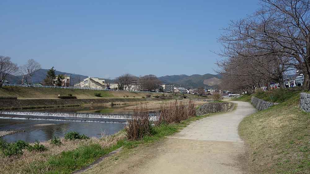 賀茂川沿いの散歩コース 桜並木はまだつぼみ