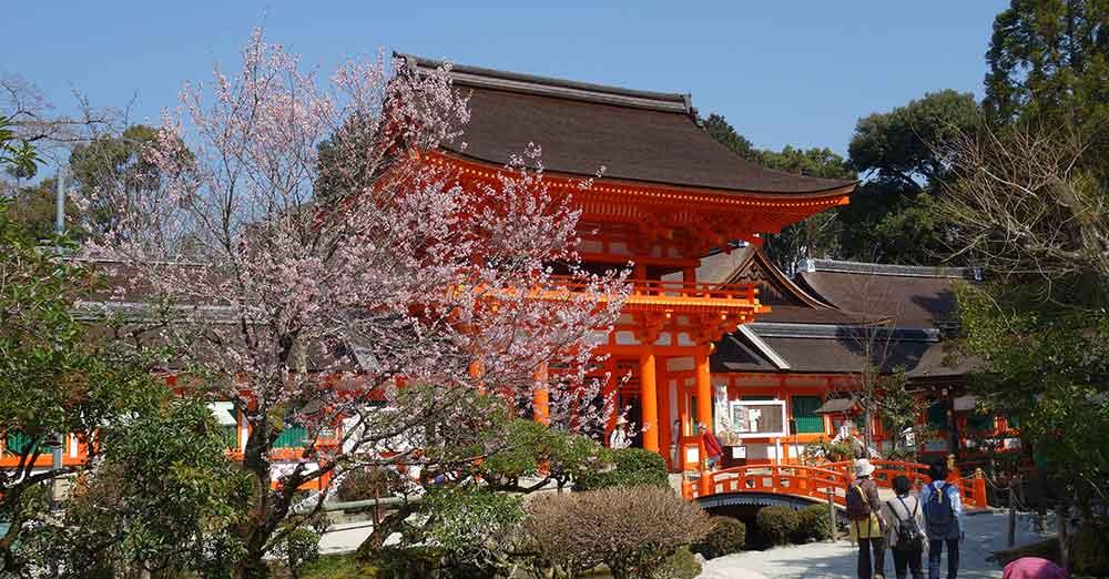 上賀茂神社に桜